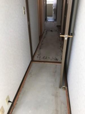 施工中廊下カーペット撤去糊付け
